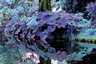 """""""La Planète bleue-016"""", photographie, tirage limité sur papier couleur 20x30 cm, sans cadre"""