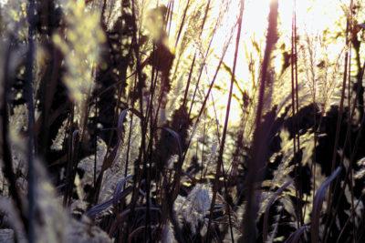 """""""La Planète bleue-026"""", photographie, tirage limité sur papier couleur 20x30 cm, sans cadre"""